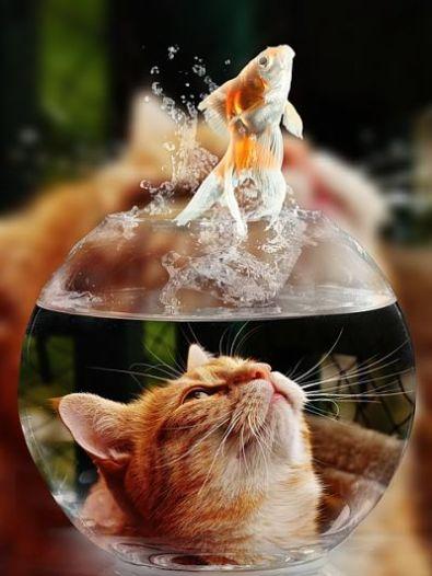 pez fuera del agua recurso