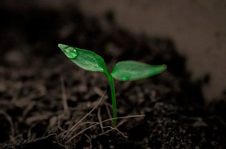 premisa semilla